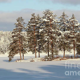 Kerstin Ivarsson - Frozen lake and forest on a cold and sunny winter day.