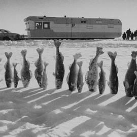 Thomas J Abercrombie - Frozen Walleye Pike Fish, Stizostedion
