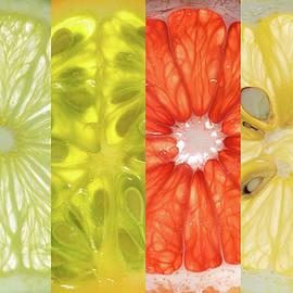 Steve Gadomski - Fruit Stripes