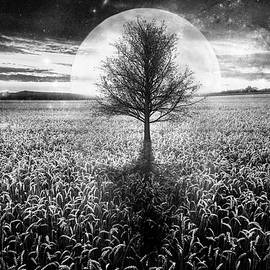 Debra and Dave Vanderlaan - Full Moon at Sunset in Black and White