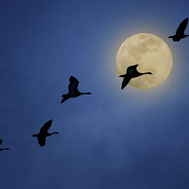 Full Moon - Geese by Nikolyn McDonald