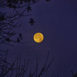Full Moon Sets Behind The Trees by Raymond Salani III