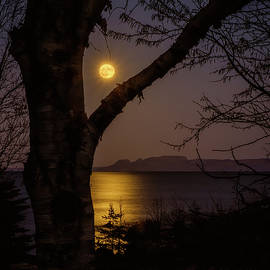Greg McDougall - Full Moon through Birch