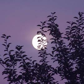 Vesna Martinjak - Full Moon