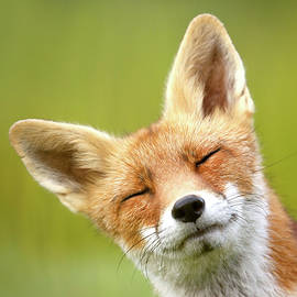 Funny Fox Photo Bombing my Photo by Roeselien Raimond