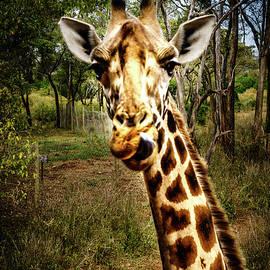 Alfredo Alegrett - Funny Giraffe