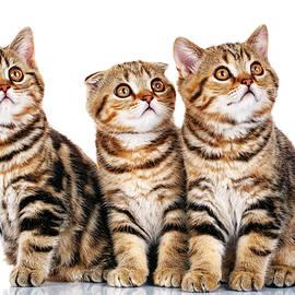Serhii Kucher - Funny Kittens