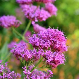 Kathy Yates - Garden Beauty