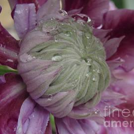 Garden Beauty by Kim Tran