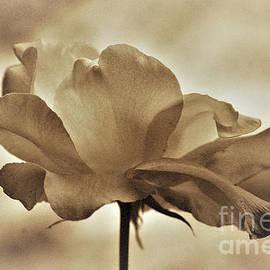 Ron Evans - Garden Flowers Series