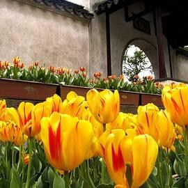 Garden in Hangzhou by Marti Green