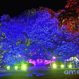Kaye Menner - Garden of Light by Kaye Menner