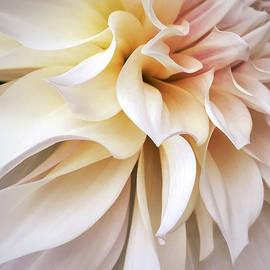 Garden Queen 1 by Jill Love
