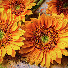 Garden Sunflowers - Garry Gay