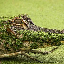 Gator Camo by David Johnson