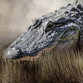 Donna Kennedy - Gator in the Grass