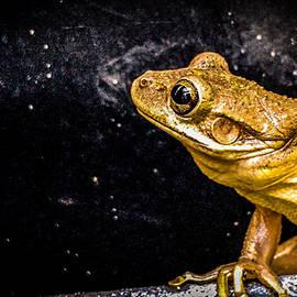 Gazing frog by Janal Koenig