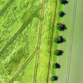 Matthias Hauser - Geometric landscape 09 trees and fields aerial