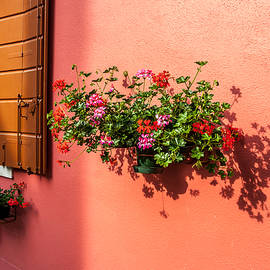 Geranium And Window by Peter Tellone