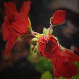 Richard Andrews - Geranium Cluster