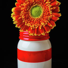 Gerbera Daisy In Jar - Garry Gay