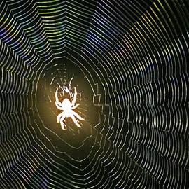 Ghost Spider by Shoal Hollingsworth