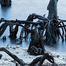 New Orleans's Ghostly Cypress Knees In Lake Ponchartrain by Kay Brewer