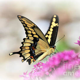 Diann Fisher - Giant Swallowtail