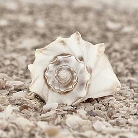 Gift of the Sea by Kim Hojnacki