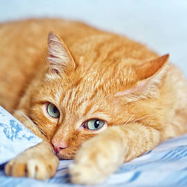 Oksana Ariskina - ginger Cat