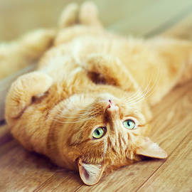 Oksana Ariskina - Ginger Lazy Cat
