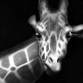 Giraffe In Black And White by Angela Murdock