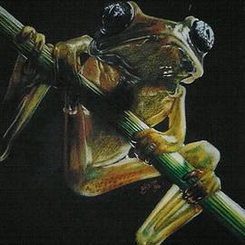 Barbara Keith - Glass Large-eyed Frog