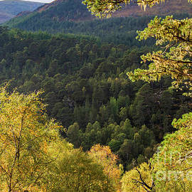Glen Affric Fall Colors by Bob Phillips