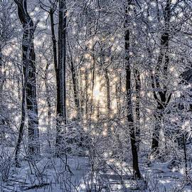 Glistening Trees by Erika Fawcett