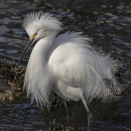 Glorious Egret by Bruce Frye