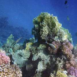 Glorious Red Sea World 2