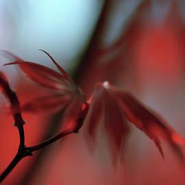 Jenny Rainbow - Glow of Japanese Maple Leaves