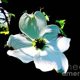 Debra Lynch - Glow Of The Dogwood