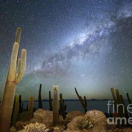James Brunker - Glowing Heavens Above Cacti on Incahuasi Island Bolivia