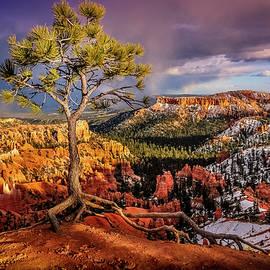 Dave Koch - Gnarled Tree at Bryce Canyon