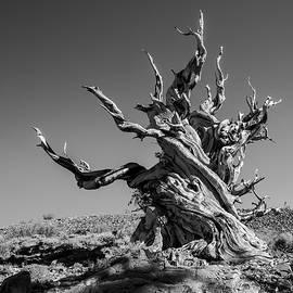 Alexander Kunz - Gnome Tree