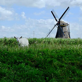 Goat And Windmill by August Timmermans
