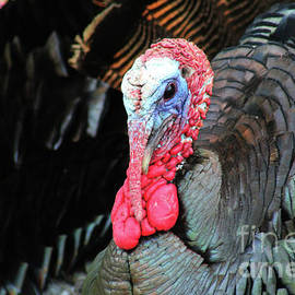 Maili Page - Gobble Gobble