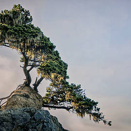 God's Bonsai by Betty Depee
