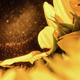 Julie Weber - Gold Dust 2 -