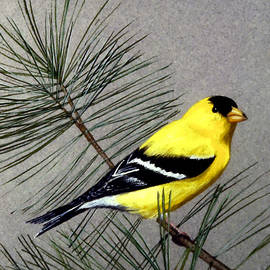 Gold Finch by Frank Wilson