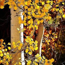 Gold Rush by Toni Abdnour