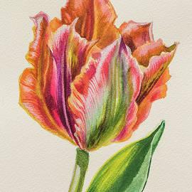 Fiona Craig - Golden Artist Tulip 1