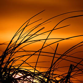 Dianne Cowen - Golden Beach Dreams